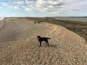 Sudbourne Beach 14th April 2021credit: Simon Reid